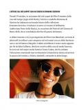 dimartino-press2018-rumors-02